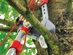 Baumpflege ohne Leiter